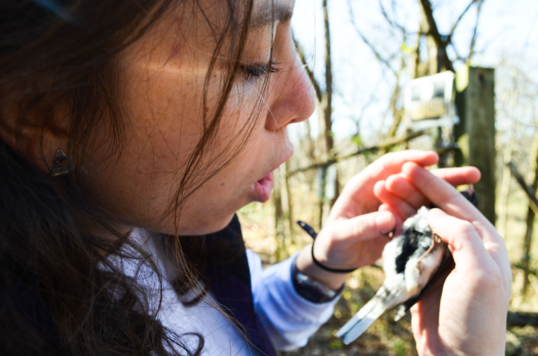 Student researcher holding a bird in the forest.